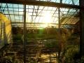 Sonnenuntergang im Gewächshaus